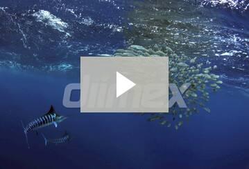 New Content Showcase video