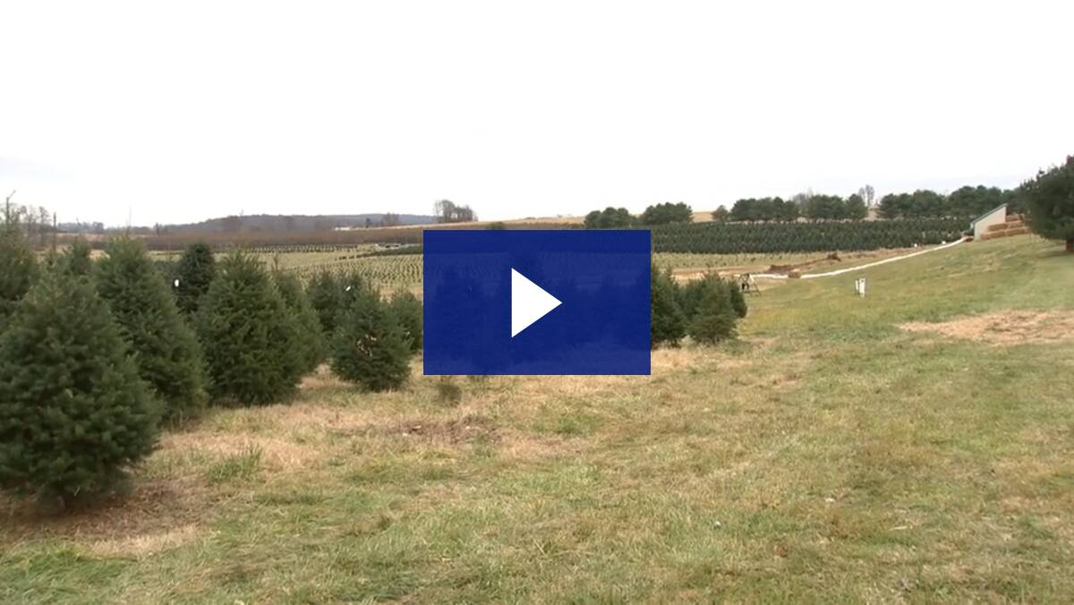 12/05/19 Spotlight on the 28th - Family Tree Farm