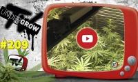 UNDERGROW TV #209 Cultivo Led floración, Dudas con weed octubre, Critical Exclusive, Todo Grow Led