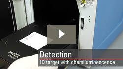 Detect your protein by chemiluminescent Western blot