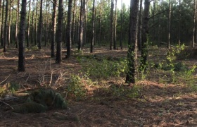 The Benefits of Timber Harvest for Whitetails