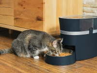 Video: PetSafe® | Smart Pet Feeder
