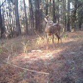 Big buck keeps coming back to Big Game Butter!