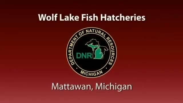 Wolf Lake Fish Hatchery Case Study