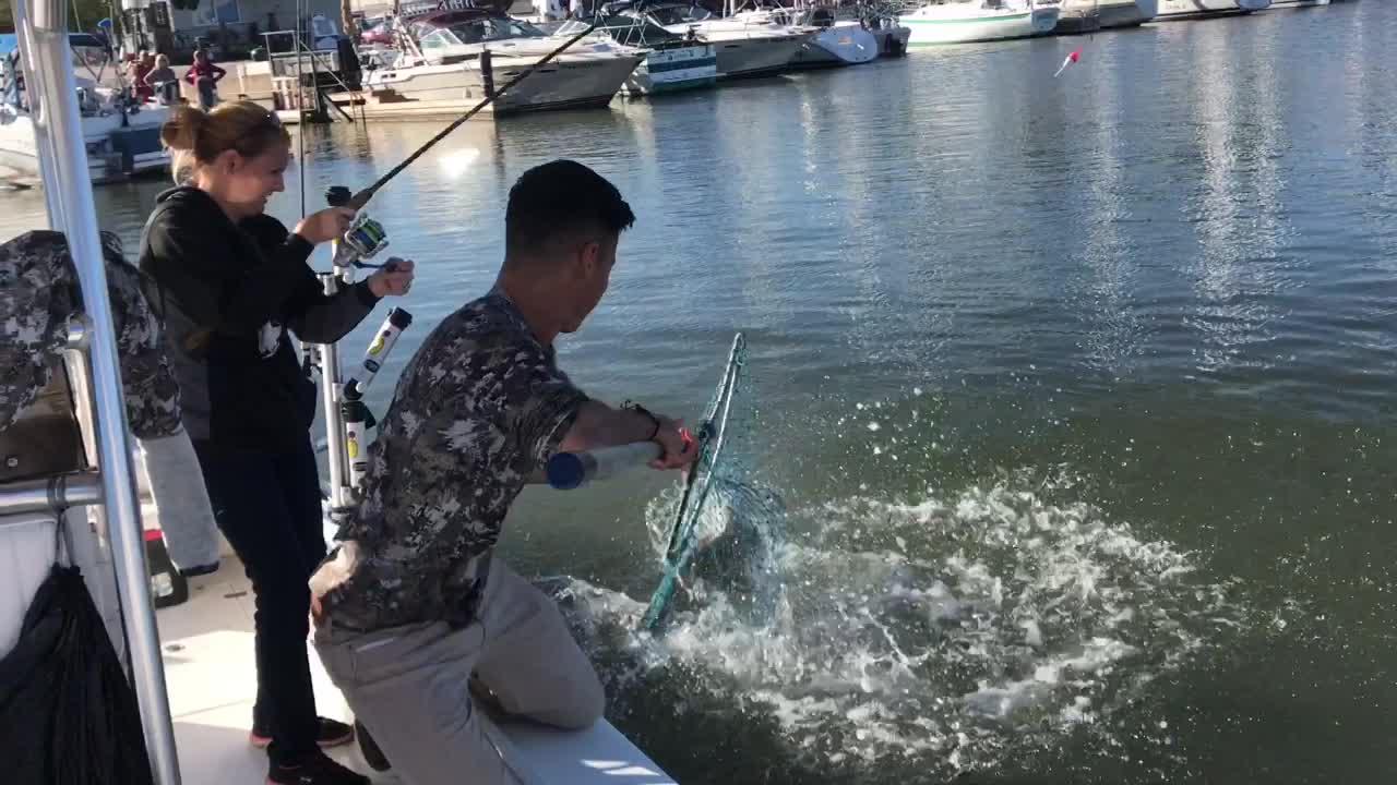 Milwaukee offshore fishing charters llc milwaukee wi for Milwaukee charter fishing