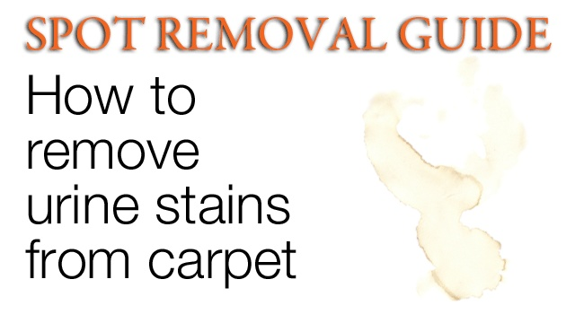 How To Get Urine Stains Out Of Carpet Removing From Spot Removal Guide