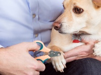 Video: Zen Clipper | Safety Pet Nail Clipper
