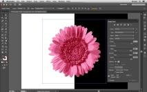 Como vetorizar uma imagem com fundo transparente?