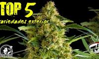 Top 5 de las mejores variedades de cannabis de exterior