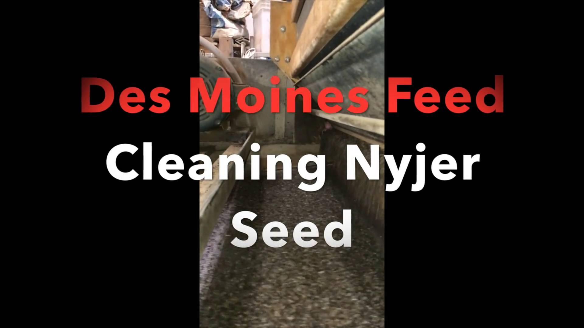 NYJER Seed 99.5 Clean