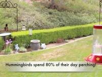 Video: Pop's Birding Company