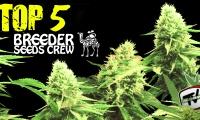 Top 5 con las mejores variedades del banco Breeder Seeds Crew