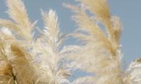 Ian Duhig – The Lammas Hireling