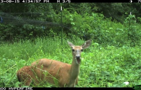 Let the Deer Eat! Summer Food Plots Before & After