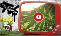 UNDERGROW TV # 213 Cultivo LED floración, Especial cáñamo industrial, Canales cannábicos, Mug Cake