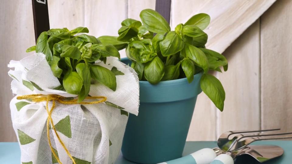 Habitat TV Video: Potato print pot plant