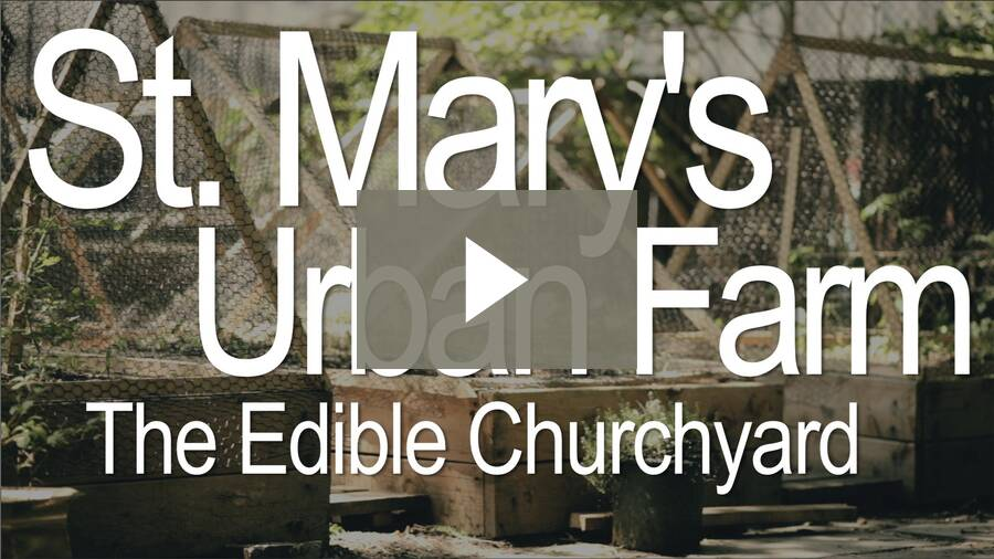 St. Mary's Urban Farm - Claire West, the edible churchyard