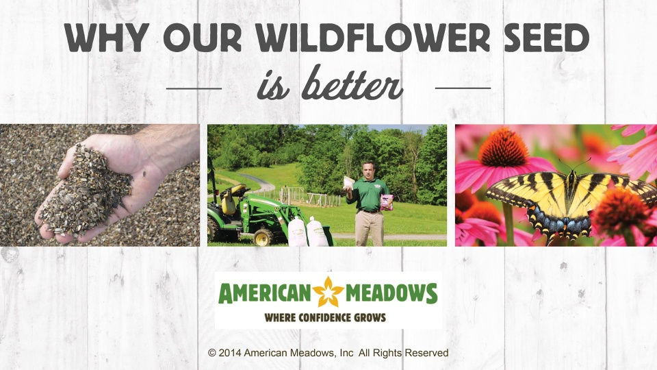 Wildflower Seed Planting Instructions – Planting a Wildflower Garden