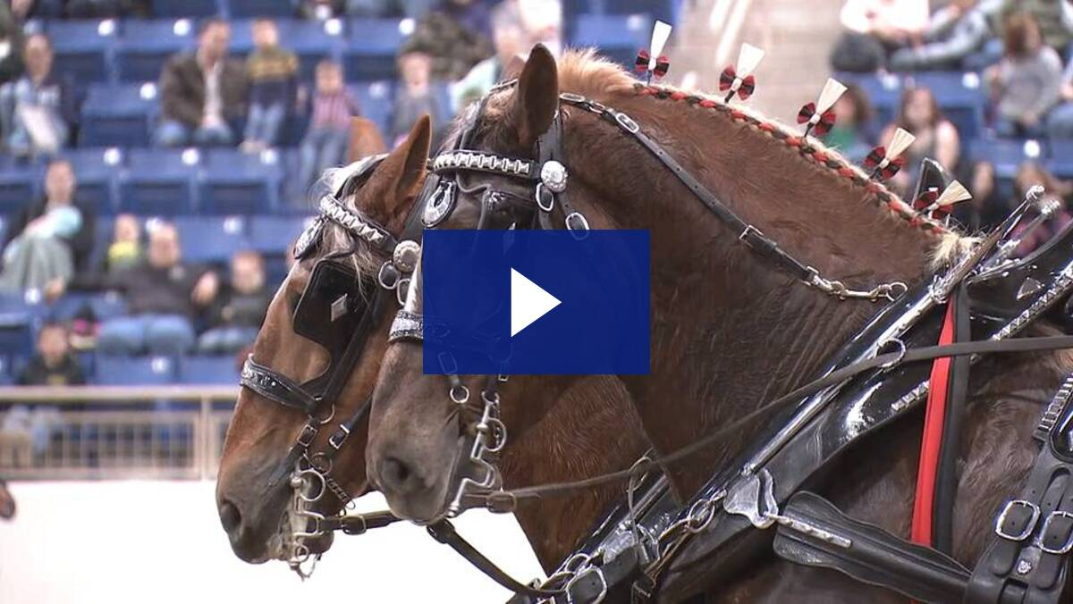 1/8/20 - Draft Horse Competition