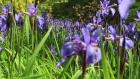 Geilston Gardens Open day