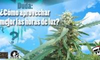 Cómo aprovechar mejor las horas de luz solar en tu cultivo de marihuana