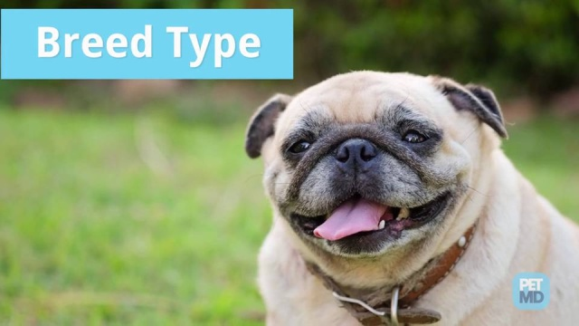 Gas in Dogs | Dog Farting | Do Dogs Fart? | PetMD