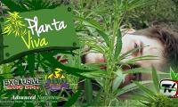 Visitamos un jardín de marihuana de exterior y damos unos consejos de cultivo