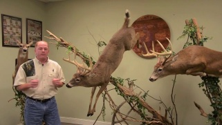 Whitetails 101