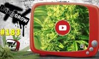 UNDERGROW TV #183 Separación de cannabinoides, más producción, tarta tricolor, noticias cannábicas