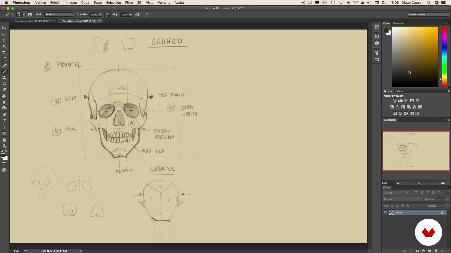 Anatomía: Osteología avanzada de cráneo, cuello y hombros - I ...