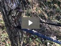 Video for Pocket Chainsaw