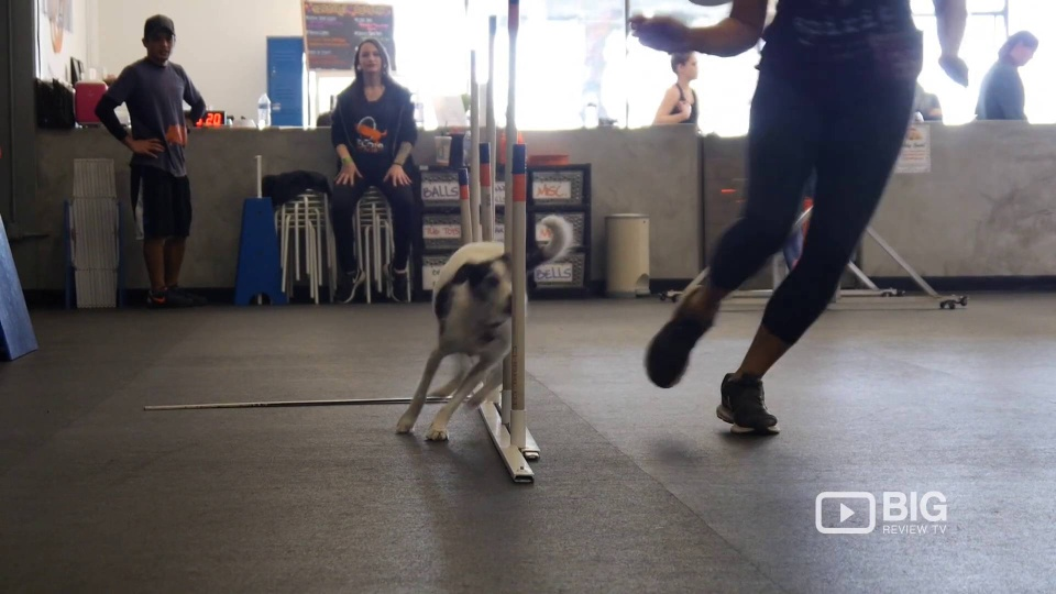 Dog Training Culver City | Zoom Room Dog Training