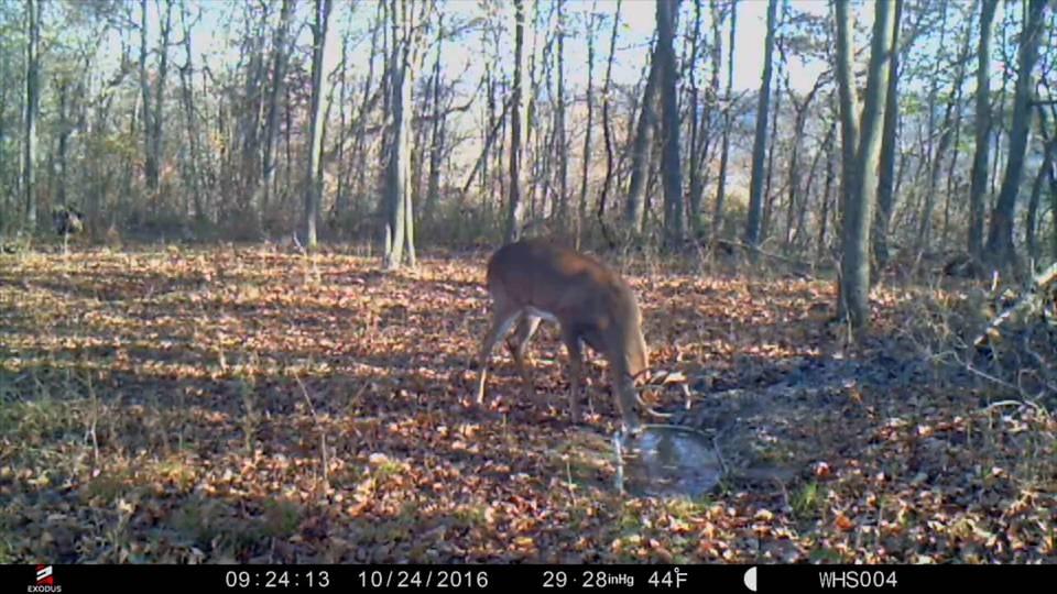 Deer Waterhole Myth Tips