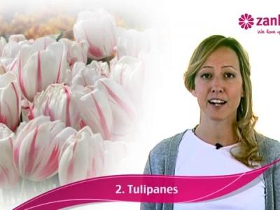 Elige las flores de tu ramo de novia según tu personalidad y estilo