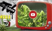 UNDERGROW TV #211 Tipos de boquillas; Silver Haze 9, Kebab con marihuana, Ilustración: Favre Inc
