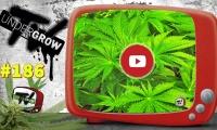 UNDERGROW TV #186 Volvemos al cultivo de la New York City, hablamos de la Jack Herer, descubre el musical Weed Lover
