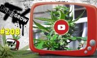 UNDERGROW TV #208 Poda automáticas exterior, Madalenas, CBD en crecimiento, Landarea Grow Shop