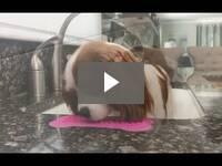 Video for Silicone Dog Bath Lick Pad