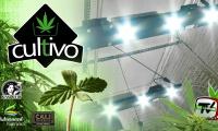 Ponemos focos LED en un cultivo de marihuana