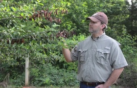 How to Control Fireblight in Fruit Trees