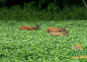 DeerTrac Food Plot Nutritional Supplement
