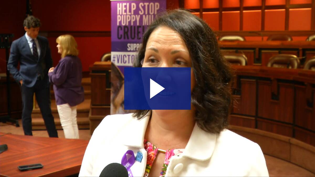 6/24/19 - PA Director Humane Society Kristen Tullo discusses Victoria's Law