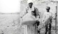 The Work of Enslaved Women