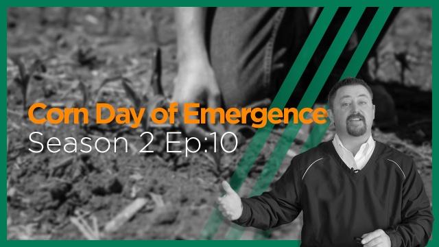 InsidePTI S2•E10 | Day of Emergence ‣ Corn
