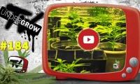 UNDERGROW TV #184 Estadios de una planta, porros del mundo, fertilizante con plátano, legalidad