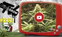 UNDERGROW TV #212 Mr Mother Earth; Top 5 variedades CBD; Bebida con terpenos; Ibiza Secret Cup